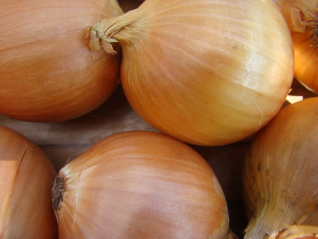 distributed: onion,a perennial herb widely distributed vegetable culture. Stock Photo