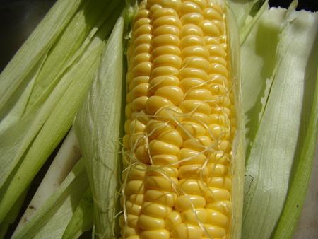 herbaceous: corn sugar, is an annual herbaceous crop,a grain crop.