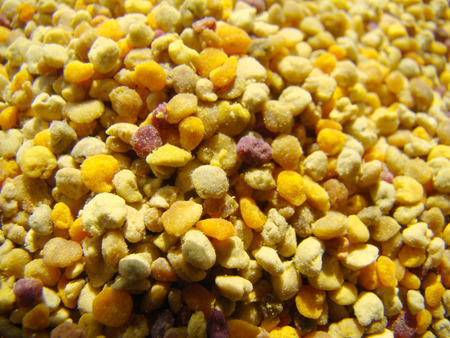 bee pollen: Bee pollen is one of the most valuable and most useful products of beekeeping.