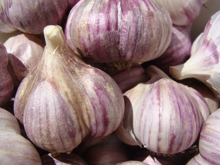 herbaceous  plant: perennial herbaceous plant species of the genus onion. Stock Photo