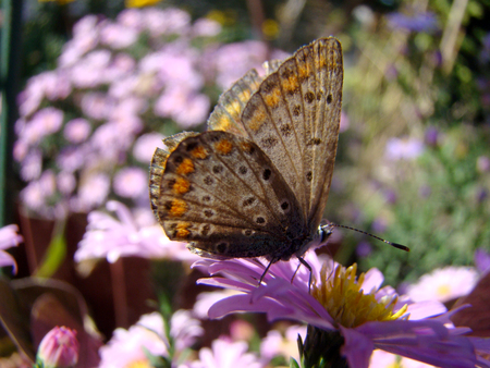 realm: butterfly sitting on a flower,posing for the camera Stock Photo