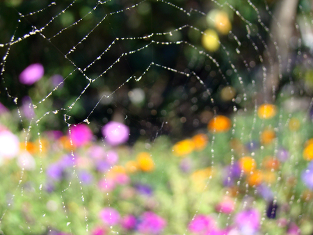 entangled: the web on which the water droplets on the background of colorful flowers Stock Photo