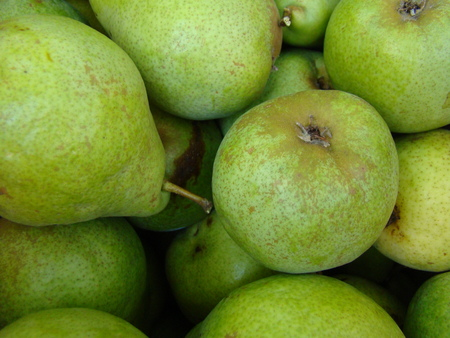 rosaceae: A pear,a genus of fruit and ornamental trees and shrubs in the family Rosaceae. Stock Photo