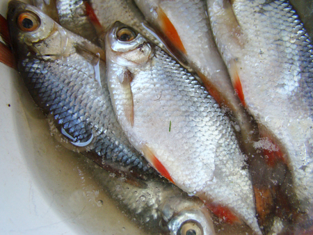 roach: the roach fish is in the brine,cooking dried fish Stock Photo
