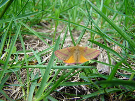 flit: a moth is sitting in the grass with its wings outstretched