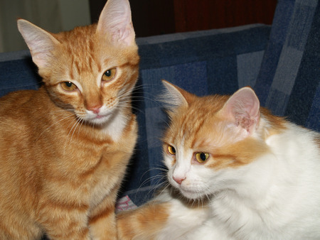 ploy: Cat, or house cat — pet, one of the most popular companion animals
