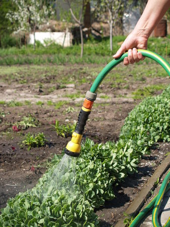 Manual watering from which flows water irrigated land Stock Photo