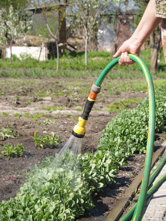 moisturize: Manual watering from which flows water irrigated land Stock Photo