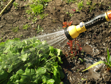 to trickle: Manual watering from which flows water irrigated land Stock Photo