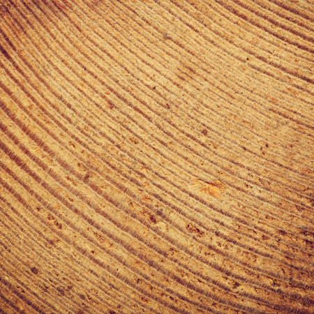 old macro: Old wood plank texture background macro shot