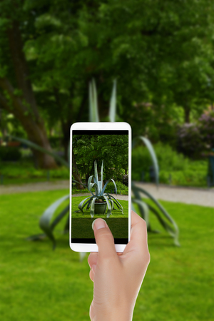 A man is making a photo of a big aloe in the Bernardine Park in Vilnius, Lithuania on a mobile phone