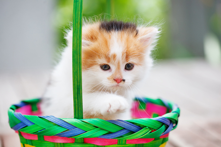 Kittens in a colorful basket 스톡 콘텐츠