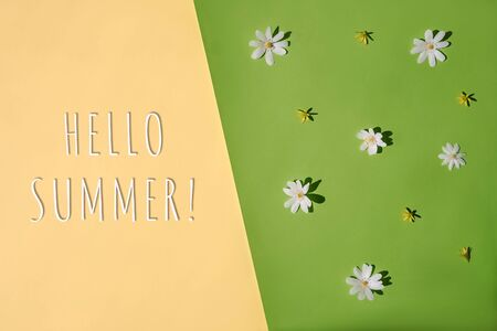Summer flat lay. Hello summer text. White chamomile daisy flowers on green background.