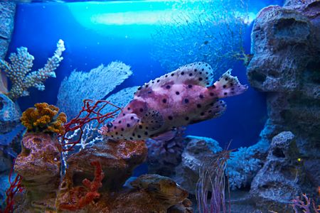 exasperate: Spotty fish
