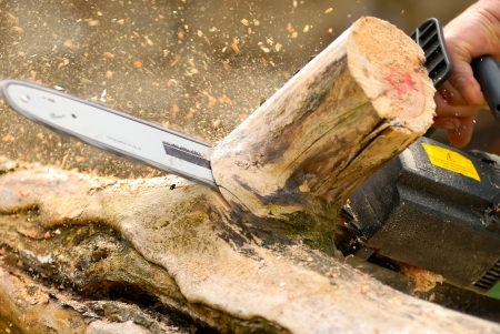 tree cutting: woodworking with chainsaw, lumberjack at work