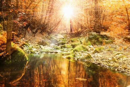 beautiful autumn fall calm tranquil stream