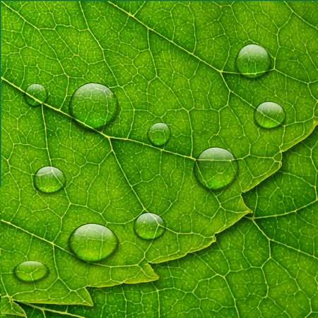 lush foliage: water drops on green leaf macro background. eco concept. Stock Photo