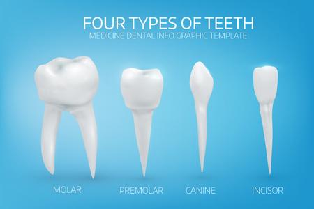 Anatomisch realistische Illustration der Arten der menschlichen Zähne auf blauem Hintergrund. Vektor medizinischen Hintergrund.