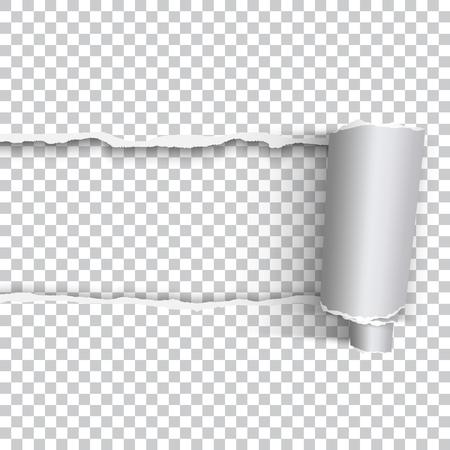 Papier déchiré réaliste de vecteur avec bord roulé sur fond transparent