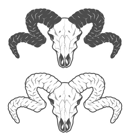 Skull of a sheep. The two versions.  Vector illustration. Illustration