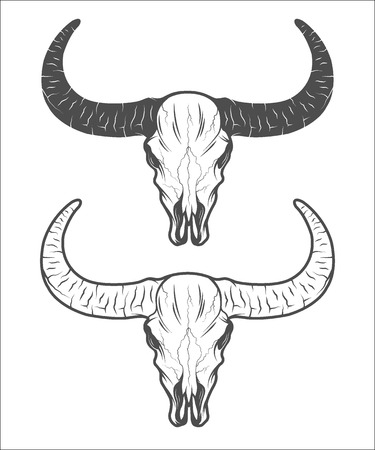 longhorn cattle: The skull of a buffalo. The two versions.  Vector illustration.