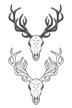 deer skull: The skull of a deer. The two versions.  Vector illustration.