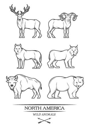 Grandi animali in Nord America. Illustrazione vettoriale. Archivio Fotografico - 40350819