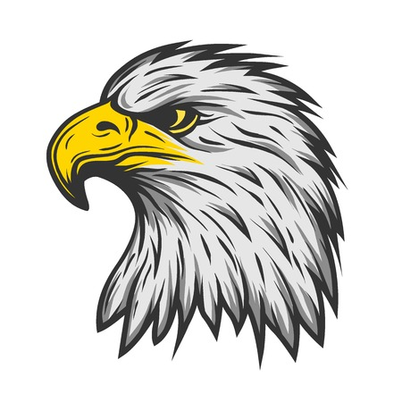 eagle feather: Proud eagle head. Color version Vector illustration.