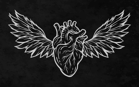 heart with wings: Anatomical heart with wings. Line art style. Illustration