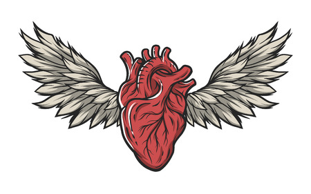 heart with wings: Anatomical heart with wings. Tattoo sign symbol Color version.