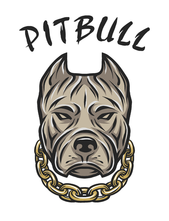 pit bull: The head of a pit bull with a chain. Vector illustration.
