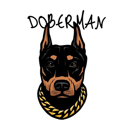 Doberman s head with a chain on his neck. Vector illustration.
