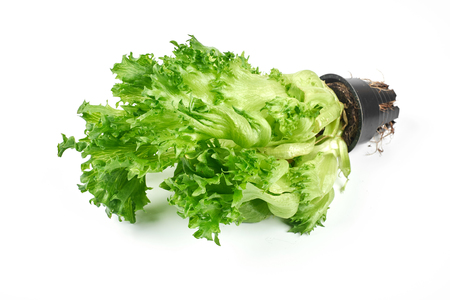 green salad in a pot on a white background