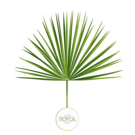 Palm leaf vector illustration. Trendy fan palm leaf isolated Stock Photo