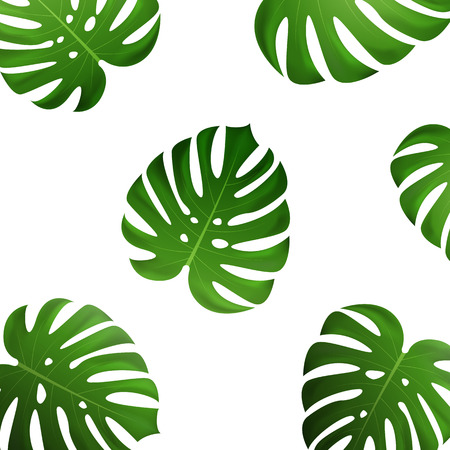 Tropical palm leaves. Vector exotic monstera leaves