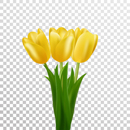 glorious: Tulips. Yellow vector tulips bouquet isolated. Flowers in different shapes.