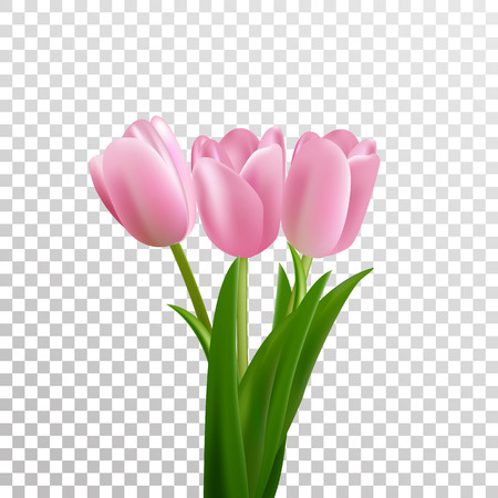 glorious: Tulips. Pink vector tulips bouquet isolated. Flowers in different shapes.