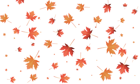 Maple leaves background. Falling autumn leaves banner template