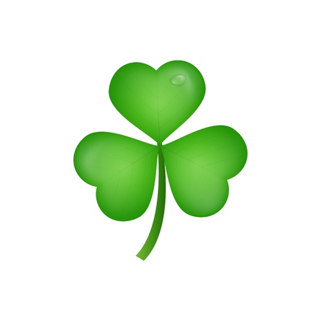 Clover. Realistic three leaf clover for Saint Patricks Day. Illustration