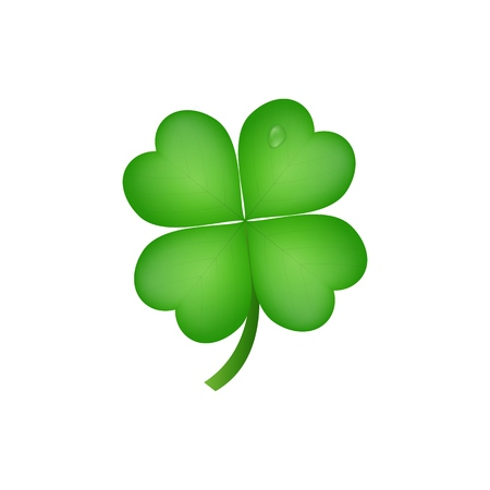 Clover. Realistic four leaf clover for Saint Patricks Day.