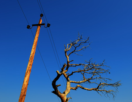 sapless: Old dried tree under a power line symbolizes the harmful impact of industry on a nature