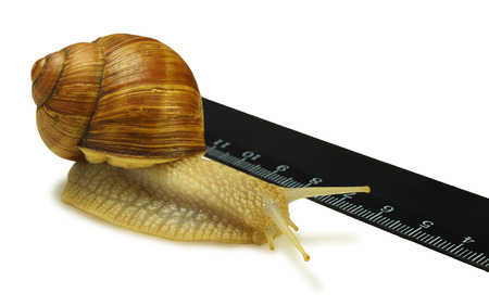 grape snail: Grape snail crawling next to the ruler on a white background Stock Photo