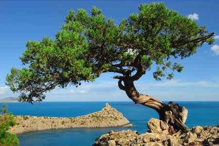 brink: Lonely juniper on the brink of the rock over a blue bay Stock Photo