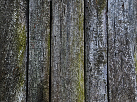 wizened: Wood textureold cracked boards