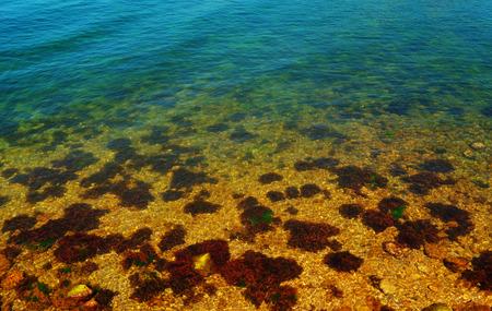 Seascape visible through the water seabed algae in the coastal zone of the Black Sea Crimea photo