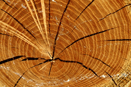 scabrous: Natural background the section of dry logs with cracks and traces of slugs closeup Stock Photo