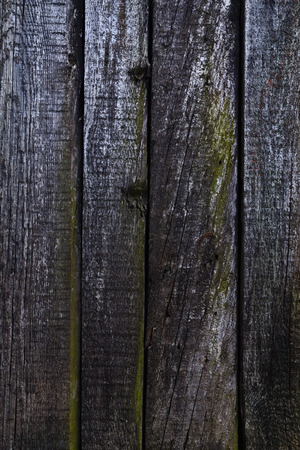 upright row: Texture-old cracked boards covered with fungus, standing in a row Stock Photo