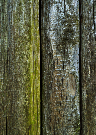 Wood texture - old cracked boards with fungal mold