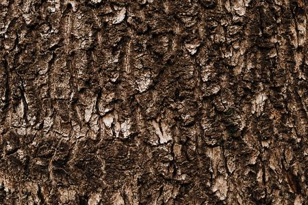 Natural texture - the tree bark brown hue closeup