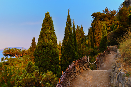 The path in the Crimean mountains over the sea among the juniper on a warm summer evening Фото со стока